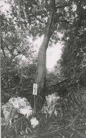Fが首を吊った栗の木。 写真を見る限り、確かに枝が高い。 この木も事件後すぐに切られてしまい、現在では残っていない。