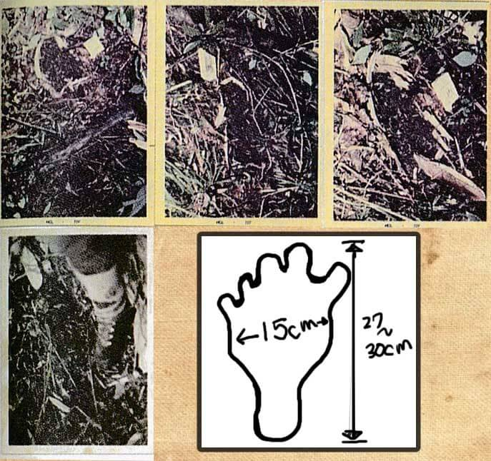 ヒバゴンの足跡とされるもの。 正直、写真では足跡かどうかすら、イマイチよくわからない。 日本の謎と不思議