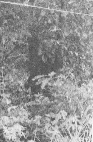 三谷氏の撮影したヒバゴン。